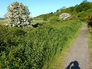 Cadborough cliff path